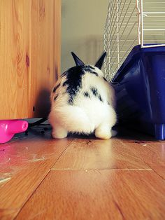 Bunny looks poised to start digging - July 4, 2012