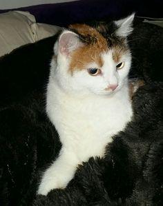 Cats, Animals, Animales, Gatos, Animaux, Animal, Cat, Animais, Kitty