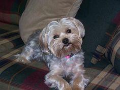 My little Zoey....so sweet!!