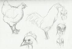 Alex & Jazzy's Summer Project: Idea 4: Chicken sketches