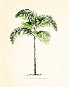 Antique French Palm Tree Plate 35  Botanical 1878 8 x 10 Art Print Wall Decor. $10.00, via Etsy.