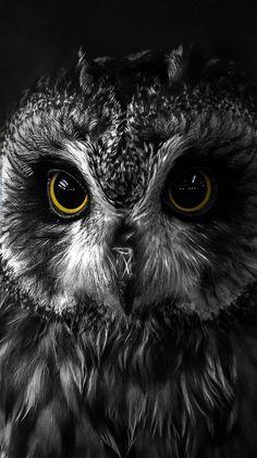 Owl Photos, Owl Pictures, Owl Wallpaper, Animal Wallpaper, Beautiful Owl, Animals Beautiful, Beautiful Pictures, Owl Bird, Pet Birds
