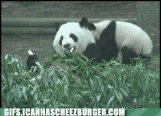 Animal Gifs: HI-YA
