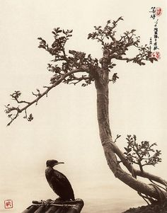 PHOTOGRAPHY IN THE STYLE OF TRADITIONAL CHINESE PAINTING BY DON HONG-OAI