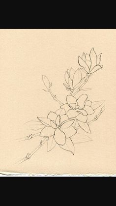Flower line drawing. Magnolias