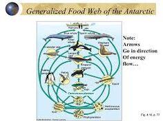 Antarctic Food Web Little Passports, Elephant Seal, Emperor Penguin, Blue Whale, Killer Whales, Antarctica, Ecology, Classroom, Activities
