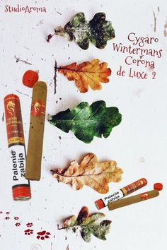 ❧ Cygaro Wintermans Corona de Luxe 2 ❧    ❧ Cygaro to oferuje nam pełnie smaku i bogatą aromat. Kompozycja tytoni z Jawy, Brazylii, Kolumbii i Dominikany. Całóść zawinięta w złoty liść z Sumatry. Każde cygaro jest zawinięte w folię oraz zapakowane w elegancką aluminiową tubę.   STUDIO AROMA ZAPRASZA: http://studioaroma.com.pl/pl/p/Cygaro-Wintermans-Corona-de-Luxe-2/1536 ❧