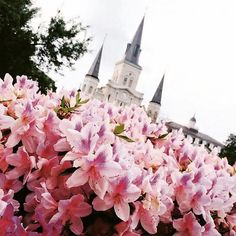 We want to see your unique local perspective on the city you love! Tag your New Orleans pictures with #ExploreLikeALocal to be featured!  Regram from @lizdaino  #FUHWE #NewOrleans #NOLA #JacksonSquare #FrenchQuarter #followyournola #NolaLove #spring #Springtime #StLouisCathedral #Azaleas #flowers #pink by fuhweapp