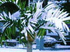 LED Lighted Palm Tree.