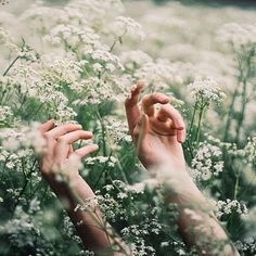 gambar flowers, hands, and nature Solas Dragon Age, Adam Parrish, Claire Fraser, Anne Of Green Gables, Aster, Mystic Messenger, Big Fish, Twilight, Bloom