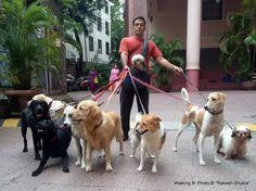 Rakesh paseando a los perros