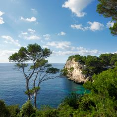 Shady pine trees along the steep coastline of Galdana - Menorca, Spain Menorca, The Places Youll Go, Places To Go, The Good Place, Beautiful Places, Around The Worlds, Pine, Explore, Adventure