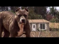 Parece un perro peligroso Cuando veas esto te será dificil no llorar - YouTube