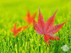 Załóż trawnik jesienią