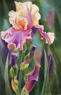 Purple Iris, Fine Art Reproduction, Double  Matted  11x14