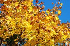 Leaf Peeper Alert – Fall Color Sightings - Fayette Woman