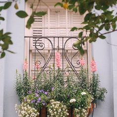 I would have never thought I'd be so inspired by all these window boxes. Holy moly, they were gorgeous! They made me want to get a paintbrush and recreate everything I saw, so quickly 🎨#charlestonlife #charlestonsc #charlestonflowers #beautyofflowers