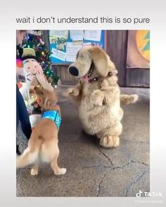 Funny Dog Videos, Funny Dogs, Cute Dogs, Funny Animals, Cute Animals, Dog Modeling, Dog Photography, Dog Walking, Mans Best Friend