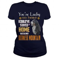 Bernese Mountain Lucky Home With My Bernese Mountain Dog