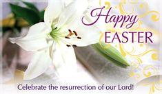 Easter Pictures Religious for Facebook   easter lily ecard send free personalized easter cards online