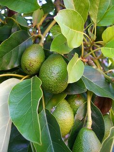 Organic Gardening: The best dwarf fruit trees to grow in pots #Fruit_Gardening