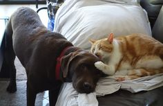 This dog and cat's adorable daily ritual will warm your heart