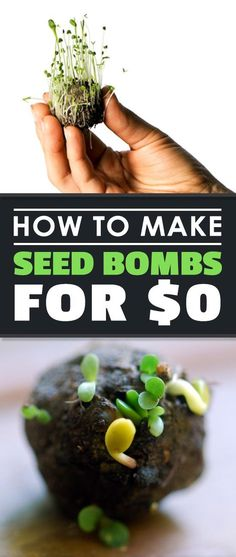 Learning how to make seed bombs is a great way to practice urban gardening if you see any barren spots of land in your city that need plants!