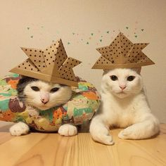 cats in hats by naomiuno