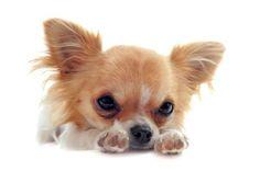 Las mascotas también sufren alergias