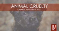Animal Cruelty Laws in Texas | Cruelty to a Non-Livestock Animal