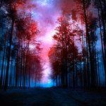 deviantART Shop Framed Wall Art Prints & Canvas   Digital Art   Photomanipulation   magical forest by artist *kokoszkaa