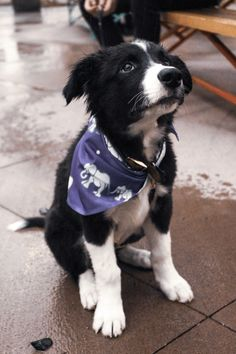 Dog Breeds Little .Dog Breeds Little Love My Dog, Dog Breeds Little, Cute Dogs Breeds, Puppy Breeds, Cute Animal Pictures, Puppy Pictures, Sweet Dogs, Australian Shepherd Dogs, Retriever Puppy