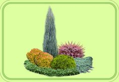 1. Juniperus scopulorum 'Blue Arrow'  2. Berberis thunbergii 'Carmen'  3. Spiraea japonica 'Fire Light'  4. Thuja occidentalis 'Danica'  5. Juniperus horizontalis 'Blue Moon'  6. Cotoneaster dammeri