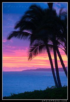 ✯ Postcard Palms