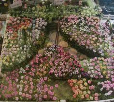 Gorgeous miniture garden