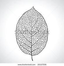 teak leaf macro texture - Căutare Google