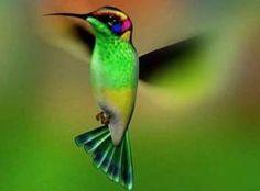 animales pájaro verde