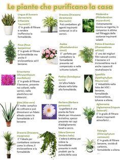 INSIDE THE TRUTH: Purifica l'aria di casa con queste piante. Schede e foto