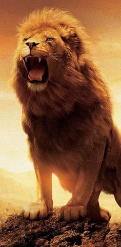 Picture of The Lion Roaring In Hilltop Case for iPhone 6 PC Material Transparent Lion Wallpaper Iphone, Wild Animal Wallpaper, Cat Wallpaper, Wallpaper Pictures, Iphone Wallpapers, Full Hd Wallpaper Android, Full Hd Wallpaper Download, Wallpaper Wallpapers, Nature Wallpaper