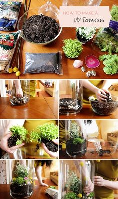 How to Make a DIY Terrarium.Materials  The project can be completed from start to finish (including clean up) in less than an hour. You'll need the following:    • Tall Glass Jar (this is the small one!)  • rocks and stones as filler  • rocks and stones as decoration  • activated charcoal  • potting soil  • plants (ferns and mosses)  • preserved moss  • billy buttons (Craspedia)