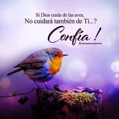 Mateo 6:26 Mirad las aves del cielo, que no siembran, ni siegan, ni recogen en graneros; y vuestro Padre celestial las alimenta. ¿No valéis vosotros mucho más que ellas?♔