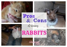 Thinking of adding rabbits to your homestead?  here's some pros and cons of raising them~The Homesteading Hippy