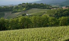 Italy's Collio wine route: top 10 guide  Italy's north-eastern Collio region offers a startling array of little-known wines, with small, f...