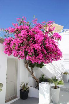 Rustic Gardens, Outdoor Gardens, Mediterranean Garden, Flower Aesthetic, Front Yard Landscaping, Dream Garden, Santorini, Beautiful Gardens, Landscape Design