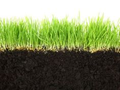 Follow these 9 steps to get a healthy lawn the natural way.