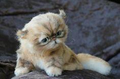 needle felted cat kitten