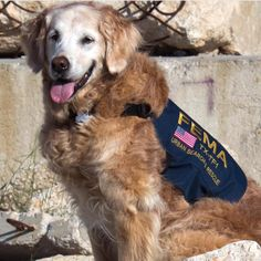 Bretagne (pronounced Brittany) was the last known surviving Search & Rescue dog from September 11th at Ground Zero. She was just laid to rest at the age of 16.  #911Memorial #911 #RescueDog #militarydogs #lovedogs