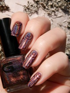 Glitter Gal Belgian Chocolate & Color Club Cherubic