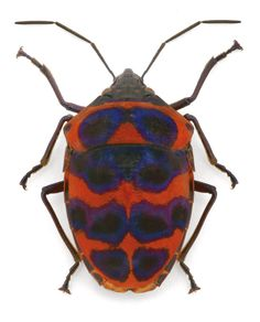 Pomegranate Blog: Insect Art by Christopher Marley