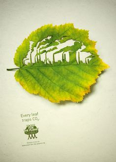 """Every leaf traps CO2"" - Plant for the Planet"